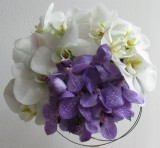 BUCHET VANDA BLUE MAGIC SI PHALAENOPSIS
